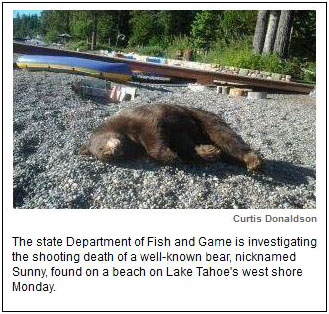 Well-known bear found dead on Tahoe beach